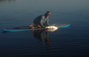sup in the keys: tarpon on fly