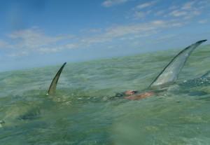 Permit fishing West of Key West
