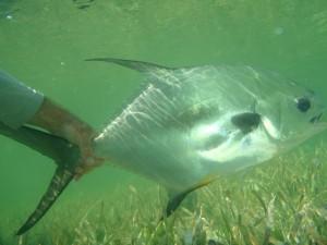 underwater Permit